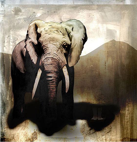 Creative Design > Elephant